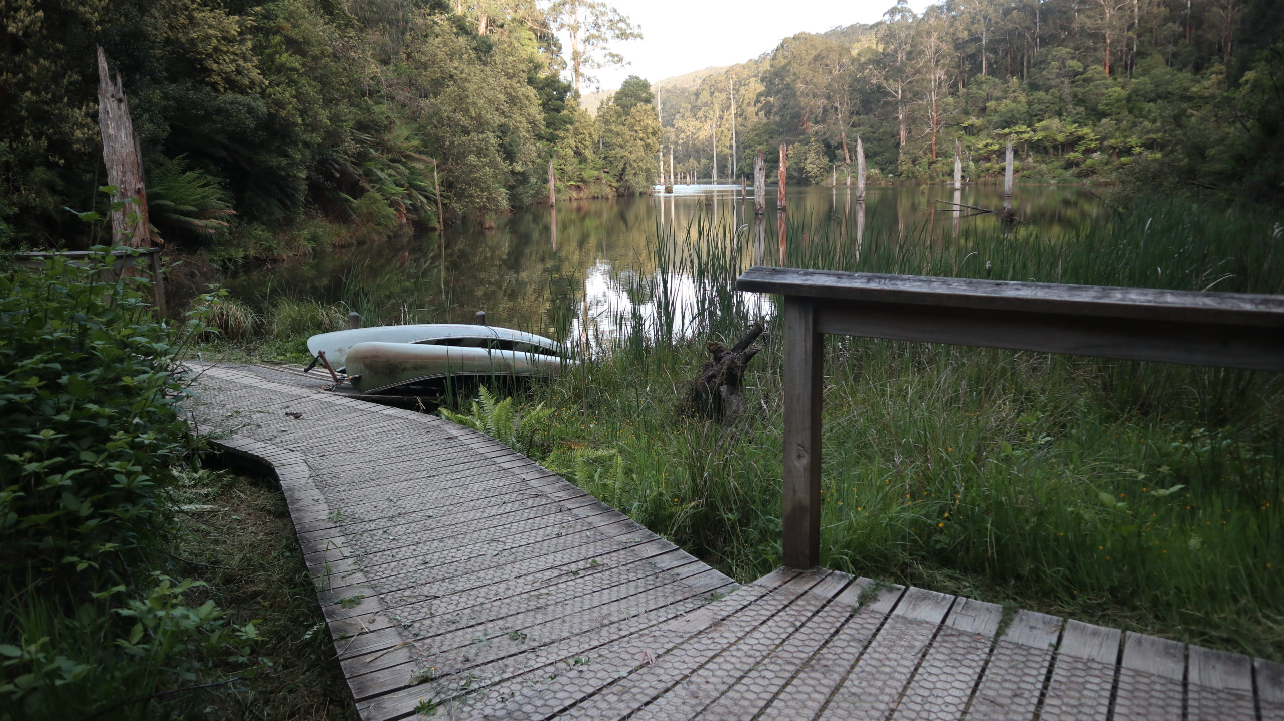 Schimmen mit Schnabeltieren am See