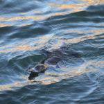 Platypus Reserve Bombala