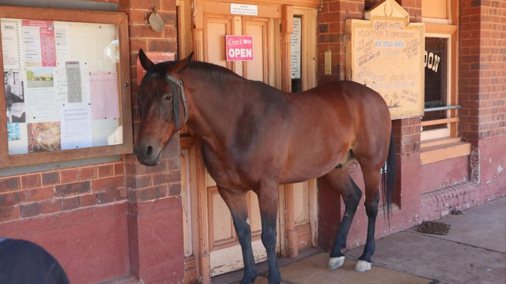 Pferd Grand Hotel Kookynie