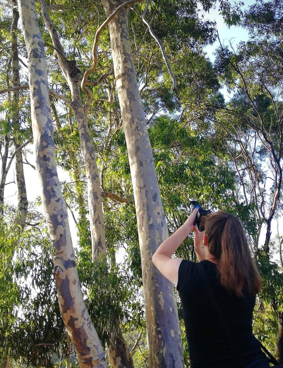 Montacute Conservation Park Jenny fotografiert Koala
