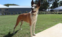 Housesitting in Mandurah: Hund