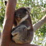 Yanchep Nationalpark