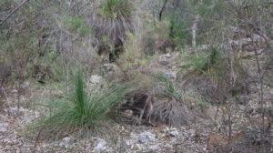 Yanchep Nationalpark: Pflanzen