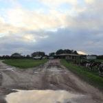 Die Milchfarm – unsere ersten Wochen