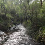 Beedelup Nationalpark