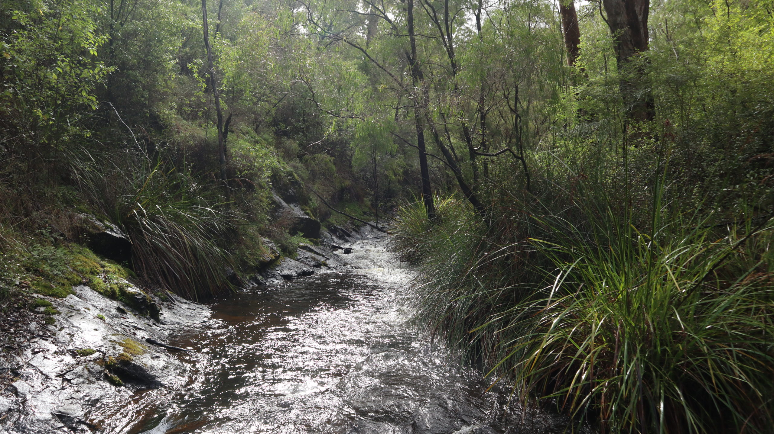 Beedelup Nationalpark: Fluss