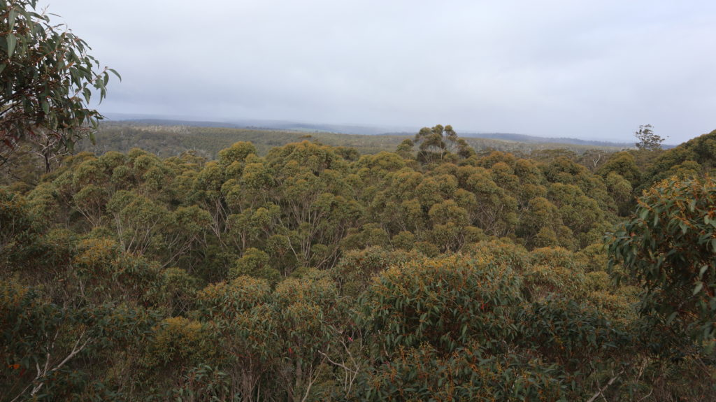 Der Süd-Westen Australiens: Ausblick über Bäume