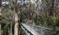 Valley of the Giants Tree Top Walk