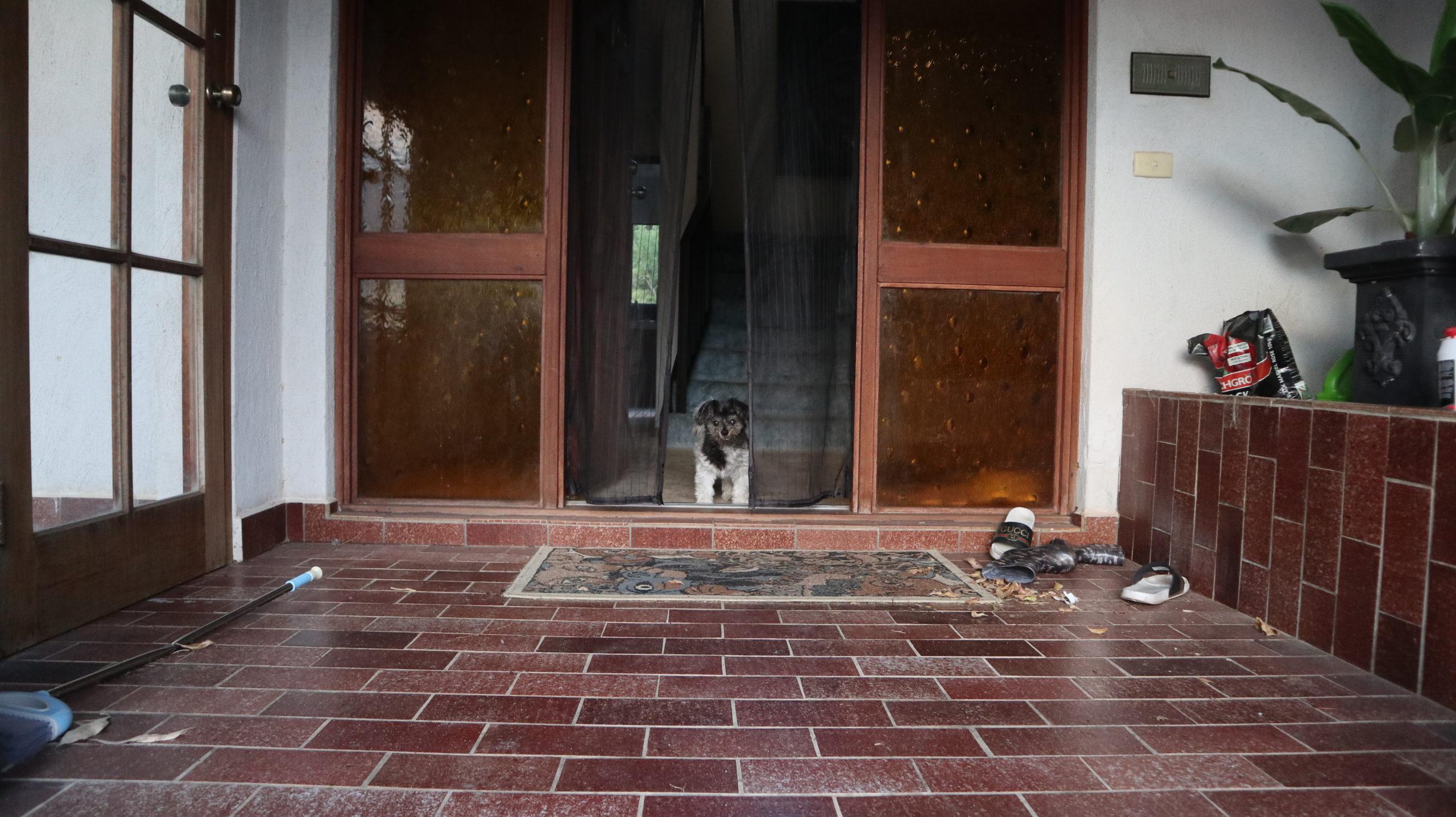 unser drittes Housesitting: Hund