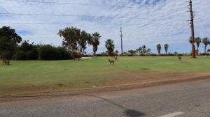 Figuren in Port Hedland
