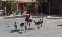 Momente: Emus