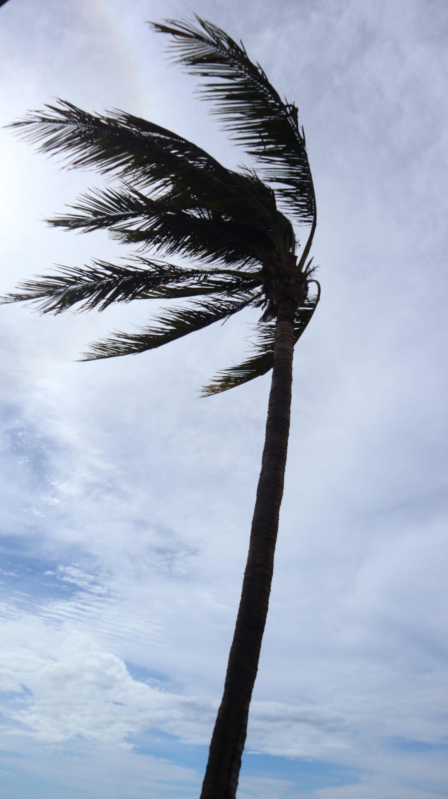 Das Unwetter: Palme