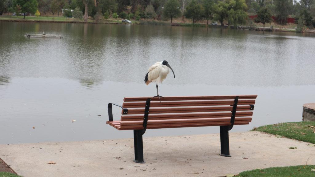 Geburtstag: Parkbesuch - Vogel auf einer Parkbank