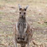 Top 10 - Dinge, die du über Australien wissen solltest