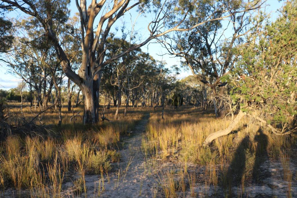Rundreise durch Victoria: Wanderweg
