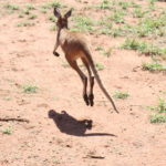 Freiwilligenarbeit im Kangaroo Retreat